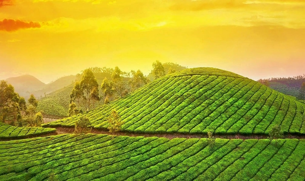 munnar honeymoon